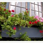 Window boxes – curb appeal without the curb!