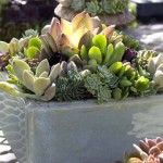 Gardening – skip the ground, use containers