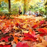 How to Prepare your Home, Kids, and Guests for Autumn's Return