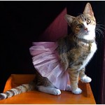 Halloween Pet Costume Inspiration – Grab Ideas Here!