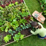 Guest Blogger: A Gardener's Guide to Choosing Tools and Supplies