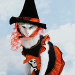 Halloween Pet Costume Ideas for your Furry Friends