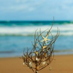 Coastal Beach Christmas… Celebrating the Season without Snow!