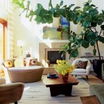 Guest Blogger: How Indoor Plants Can Brighten your Interior Home &amp; Office