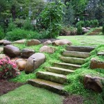 Guest Blogger: Simple Ideas for Going Green in Your Own Backyard