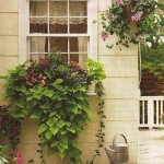 Decorating your Windows with Touches of Garden Inspiration
