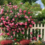 How to Create a Lasting and Beautiful Rose Garden