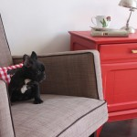 How to Shop for Pet-Friendly Furniture for your Home
