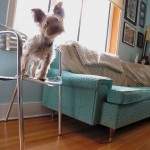 Home Pet Tips:  How to Make your Interiors Pet Friendly