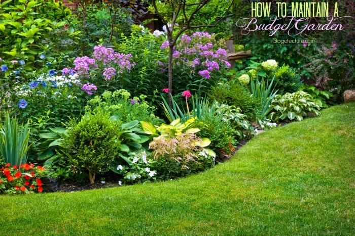 budget garden tips