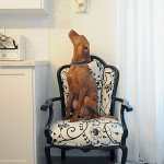 Tips for Ensuring your Pets are Safe at Home