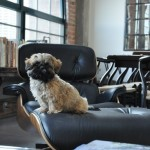 Essential Tips to Create a Pet-Friendly Home
