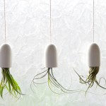 DIY Saturday #116 – How to Create Hanging Bathroom Air Plant Containers