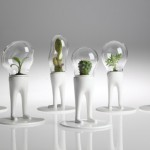 DOMSAI Terrarium Office Plants to Green Your Work Space