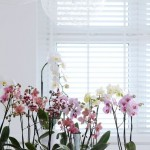 Guest Blogger: Beautifying your Winter Home with Indoor Orchids