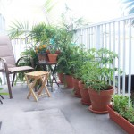 Helpful Tips for Starting your Own Urban Garden
