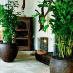 Guest Blogger: How to Choose the Perfect Plant for a Posh Living Environment