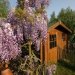 Guest Blogger: Easy DIY Tips to Build your Own Garden Shed