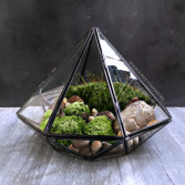 How to Make a Succulent Terrarium Tutorial