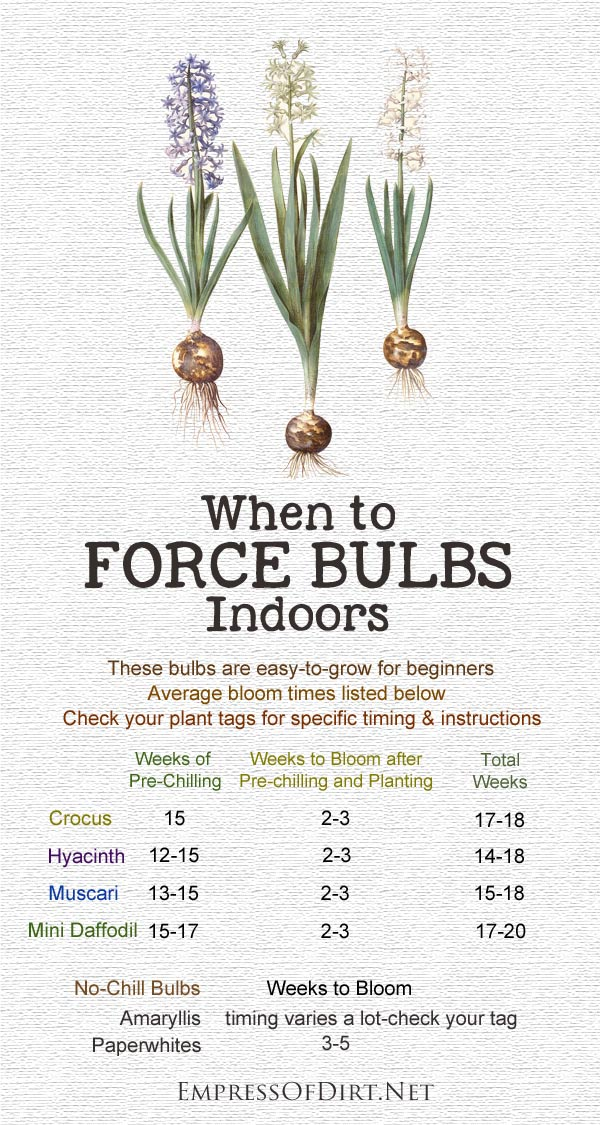 forcing bulbs calendar