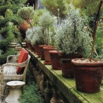 Garden Inspiration: Planting Potted Topiaries this Spring