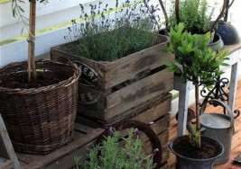 DIY Gardening: How to Plant a Spring Herb Topiary