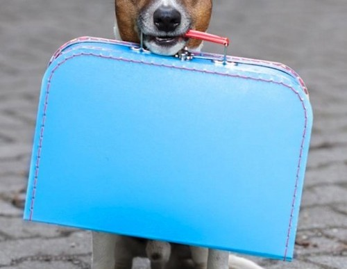 Helpful Tips for Traveling with Dogs Internationally
