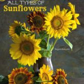 how to grow sunflowers gardening