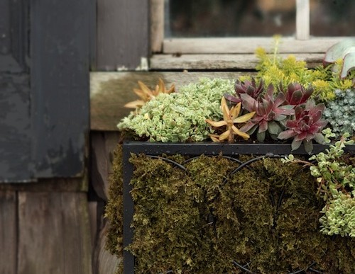 Brightening Your Exterior Home with Summer Window Boxes