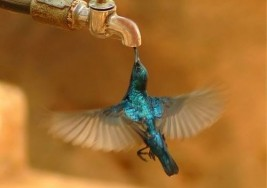 Summer Gardening: Plant these Hummingbird Attracting Flowers