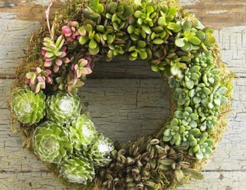 3 Ways to Display Succulents you Haven't Considered