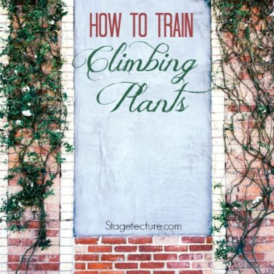 How to Train Climbing Plants (Video)
