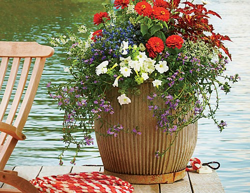 Patriotic Container Flowers: 4th of July Celebration Ideas