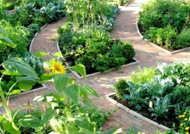 Plants Won't Grow? Simple Gardening Troubleshooting Tips