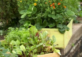 Easy Ways to Grow Vegetables in Containers this Fall