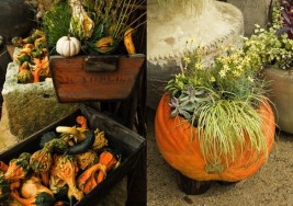 Fall DIY Planter: Using Gourds as Gorgeous Flower Displays