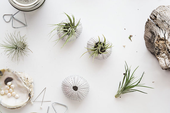 christmas-party-favor-air-plants