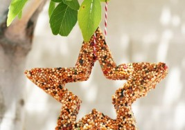 Fun Winter Craft: How to Make a Bird Feeder