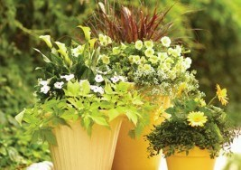 Gardening Tips: Flowers that will Survive the Sun
