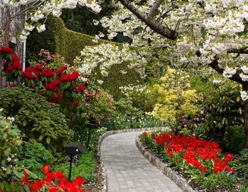 How to Plan Your Spring Garden this Season