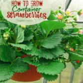 Weekend Gardening: Edibles to Grow This Spring