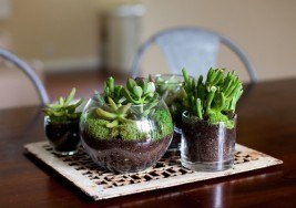 DIY Craft Idea: How to Make a Mini Terrarium