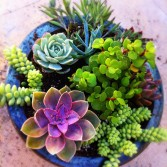 Perfect for first time gardeners, succulents are easy to propagate and care for.