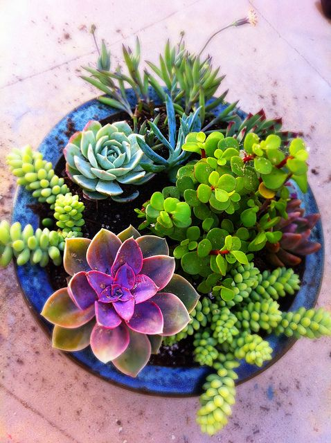 succulents indoor gardening