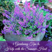 Summer heat gardening tips