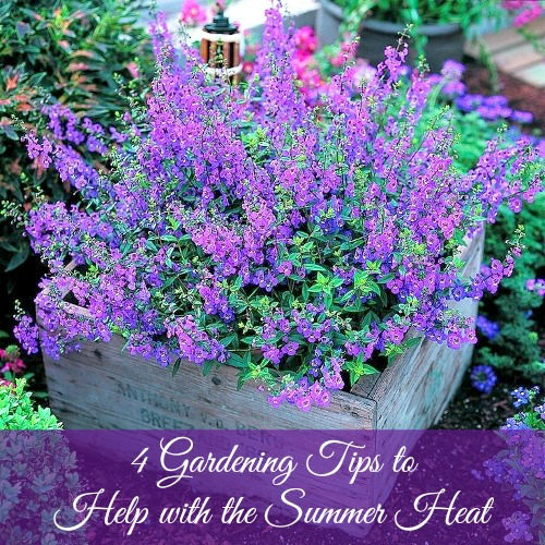 4 gardening tips to help with the summer heat - Gardening in summer heat a small survival guide ...