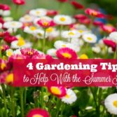 summer heat flowers tips