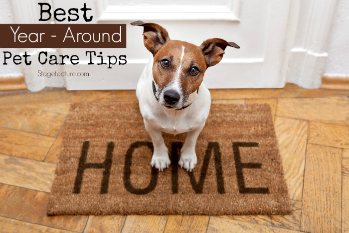 pet care tips dog home