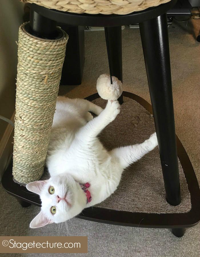 Cat Condo Cat Furniture final