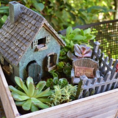 DIY Fairy Gardens: How to Find the Perfect Plants